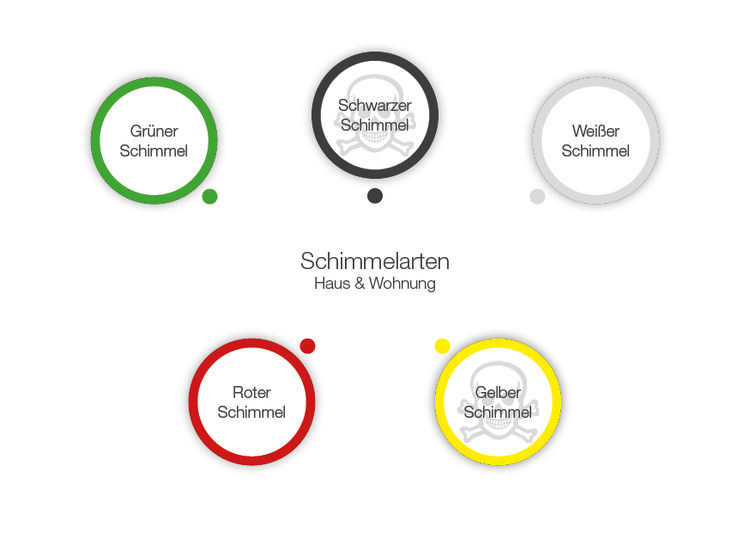 Arten von Schimmelpilz wie z.B. Schwarzschimmel erkennen