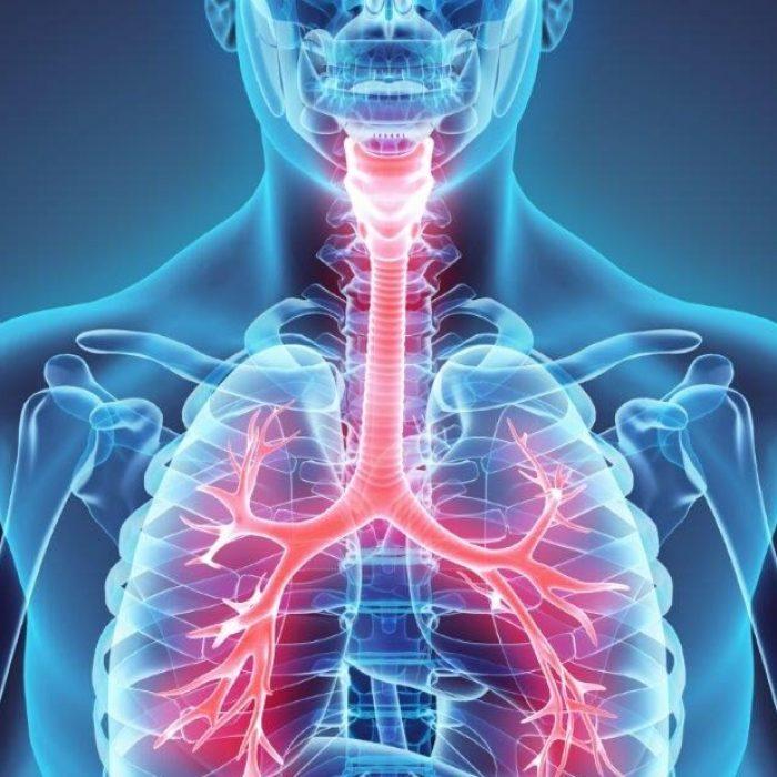 Gesundes Wohnen ohne Schimmel und Gesundheitsschäden vermeiden