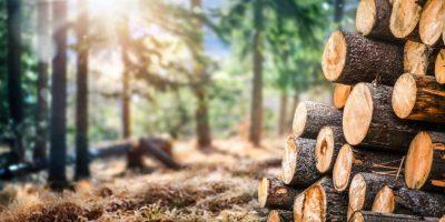 Fertigteilhäuser in Holzständerbauweise